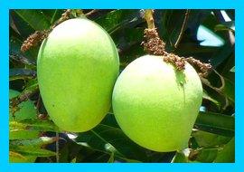 Health Benefits Of Green Mangoes