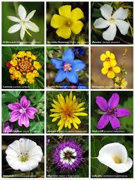 Learn Flowers
