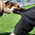 rabies, Rabies Causes Symptoms And Treatment