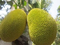 How To Open Jackfruits