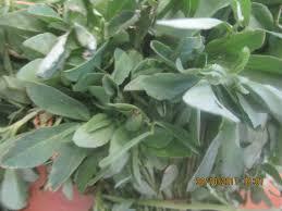 Fenugreek Leaves Health Benefits