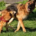 Rabies Causes, Symptoms,Treatment and Prevention