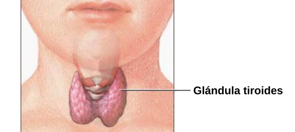 Thyroid Causes Symptoms and Treatment